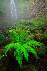 La Selva (DRGfoto) Tags: helecho primavera vida catarata tierra cascada humedad