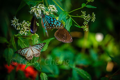Taiwan-121113-282 (Kelly Cheng) Tags: travel color colour green tourism nature animals horizontal fauna butterfly daylight colorful asia day taiwan vivid nobody nopeople colourful traveldestinations  northeastasia