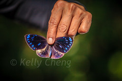 Taiwan-121113-271 (Kelly Cheng) Tags: travel color colour green tourism nature animals horizontal fauna butterfly daylight colorful asia day taiwan vivid colourful traveldestinations  northeastasia