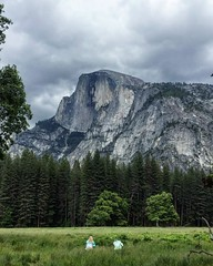Be ready to feel small, get lost, fail, and get up again to walk into the wilderness ( - Akiyo) Tags: nature nationalpark adventure yosemite halfdome medow