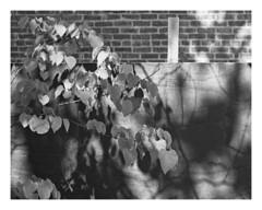 (Gene Daly) Tags: newyorkcity blackwhite yashinon genedaly olympusem5 yashicaautoyashinonds50mmf19 p5280199