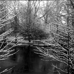 Waller Park, Bremen (Floyd in Bremen) Tags: schnee snow tree see noiretblanc lac kodaktrix neige bremen extrieur arbre parc baum bois branche mittelformat moyenformat wallerpark httpwwwfloydinbremencomthemebremencarrefilebreme14php