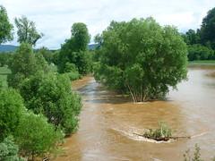 ber die Ufer ... (Jrg Paul Kaspari) Tags: river weide grn braun fluss hochwasser salix flut wittlich unwetter lieser braune treibsel