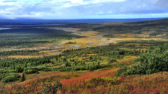 Indian summer in Denali NP (flowerikka) Tags: autumn sky usa tree nature alaska clouds landscape view wildlife indiansummer denalinp