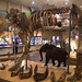 Animais que habitaram a região há milhares de anos