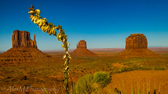 Desert Flower (The Happy Traveller) Tags: arizona monumentvalley navajocountry themittens nature landscape