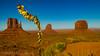 Desert Flower (The Happy Traveller) Tags: arizona monumentvalley navajocountry themittens nature landscape