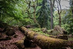 natural forest (bernd obervossbeck) Tags: nature forest natur trunk wald moos naturpark baumstamm berndobervossbeck fujixt1 naturparkhunsrck