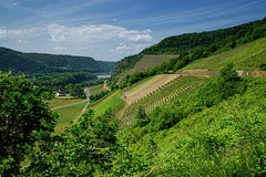 20160526-144328 (lichtschattenjaeger) Tags: rheinlandpfalz rhein leutesdorf hammerstein rheinsteig wein weinstock weinanbau schtzenweg