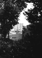 Silhouette (orzalana69) Tags: singaporestreetphotography localpark kieviiarangefinder filmphotography russianrangefinder neopanacros100
