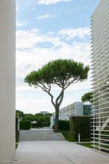 _RGR1243 (Frigo Daniele) Tags: italy tree architecture minimal albero architettura meier veneto jesolo jesolovillage