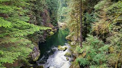 The canyon below (walneylad) Tags: park trees summer brown canada green nature water june forest woodland river moss woods rainforest scenery rocks britishcolumbia canyon trail urbanforest northvancouver ferns parkland urbanpark capilanoriver capilanoriverregionalpark