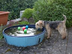 Wie bekomme ich die Blle ohne nass zu werden (rentmam1) Tags: dog hund motte