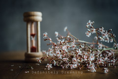 The Passage Of Time (DefinitelyDreaming) Tags: flowers stilllife macro kitchen floral eggtimer londonspride sonya99