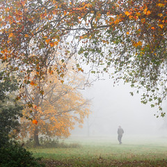 Framed in the Fog (Ida H) Tags: morning autumn england people mist man nature misty fog landscape person mood moody foggy autumnleaves figure mysterious autumnal autumnalcolours peopleinnature personinthedistance figureinthefog