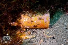 Clay Inkwells (ShaunMYeo) Tags: scubadiving inkwells gibraltar calpe underwaterphotography  gibilterra ikelite      gibraltr  cebelitark gjibraltar ibraltaro hibraltar xibraltar giobrltar gibraltrs gibraltaras ibilt