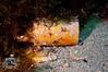 Clay Inkwells (ShaunMYeo) Tags: scubadiving inkwells gibraltar calpe underwaterphotography جبل gibilterra ikelite طارق גיברלטר 直布罗陀 гибралтар γιβραλτάρ gibraltár الطارق cebelitarık gjibraltar ĝibraltaro hibraltar xibraltar giobráltar gibraltārs gibraltaras ġibiltà जिब्राल्टर ஜிப்ரால்டர் జిబ్రాల్టర్ ยิบรอลตา جبرالٹر גיבראַלטאַר गिब्राल्टर জিব্রাল্টার 直布羅 陀જીબ્રાલ્ટર ジブラル