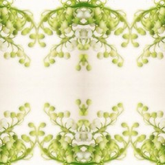 """#lilyofthevalley #abstraction #symmetryapp #symmetry #border #flowers #floral • <a style=""""font-size:0.8em;"""" href=""""https://www.flickr.com/photos/61640076@N04/8728167782/"""" target=""""_blank"""">View on Flickr</a>"""