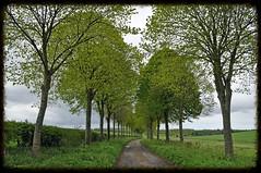 Dorset green (dawn.v) Tags: road uk trees england green landscape countryside may lane dorset avenue avenueoftrees editedinphotoshop moorcrichel