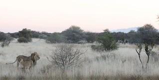 Namibia Luxury Photo Safari 3