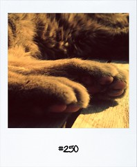 "#DailyPolaroid of 27-5-13 #250 • <a style=""font-size:0.8em;"" href=""http://www.flickr.com/photos/47939785@N05/8958897519/"" target=""_blank"">View on Flickr</a>"
