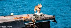 _1040982.jpg (docdave71) Tags: pictures ireland sea sun cars dogs bike boat swan stones cork fotos gambar muster bilder billeder الصور immagini kuvat εικόνεσ