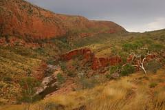 Ormiston Hues (Darren Schiller) Tags: trees storm weather landscape desert australia outback gorge alicesprings spinifex centralaustralia westmacdonnellranges
