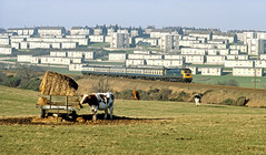 47274 fails to impress the herd as it leaves Aberdeen (delticfan) Tags: passengertrain class47 47274