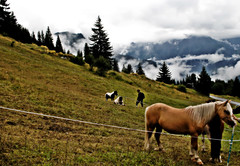OnlytheHorses (mariafrancescasabatino) Tags: vegas winter horse photo nuvole time montagna paesaggio bianche meraviglioso sfumature