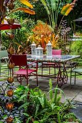 In the Garden 3, Hawaii (Julie Thurston) Tags: flowers plants plant flower leaves horizontal gardens yard garden hawaii border hawaiian tropical accessories borders planting rainchain flowerborder beautifulgarden tileaves