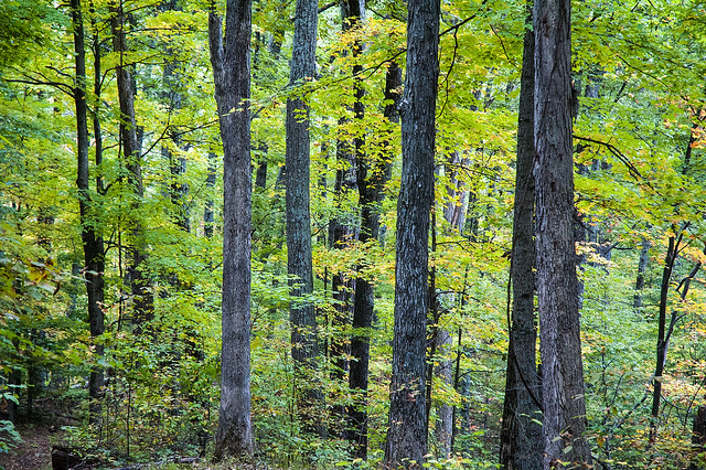 Yellowwood State Forest - October 2013