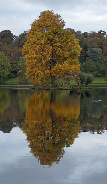 Tree at Stourhead