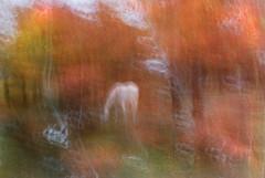 DSC_0550 (AC Fisher) Tags: longexposure autumn trees sunlight lightpainting abstract fall lights surreal cameratoss lightplay intentionalcameramovement