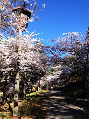 IsaiahBush_Spring_Culture