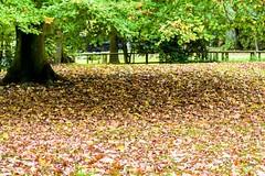~ le tapis d'automne ~ the autumnal carpet ~ (Janey Kay) Tags: autumn paris automne herbst herfst fujifilm boulognebillancourt sundayafternoon fiac dimancheaprsmidi janeykay october2013 fujifilmxpro1 fujinon1855mm fujinon55200mm octobre2013 parcderothschild