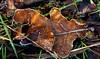 autumn walk (vuokkopeter) Tags: autumn germany deutschland herbst natur makro syksy luonto natute saksa mygearandme vpu1 vpu2 vpu3 vpu4 vpu5 vpu6 vpu7