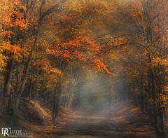 Autumn (Dennis Cluth) Tags: autumn art fall colors fog forest