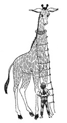 giraffe ladder (Al Q) Tags: children highlights quinn giraffe ladder sidney