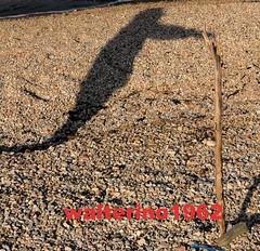 l'ombra, il bastone - Marina di Montemarciano (walterino1962) Tags: mare ombra ombre pietre luci sassi rifiuti riflessi ancona ostra bastone
