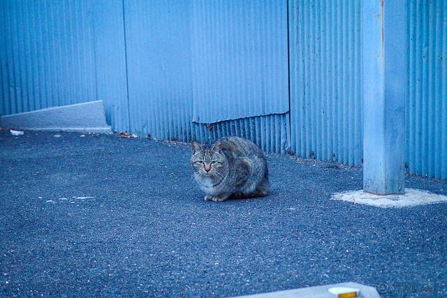 Today's Cat@2014-02-07