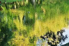 Ente auf dem Wallgraben in Bremen (bremen fotoconnection) Tags: sommer bremen ente spiegelung analogphotography stockente nikonfm wasserspiegelung wallgraben