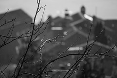 Cortona, Italy, from above, into the light, Nikon D40, 3.17.14 (steve aimone) Tags: blackandwhite monochrome landscape blackwhite geometry branches monochromatic line hills hillside cortona shallowdepthoffield latelight grays in