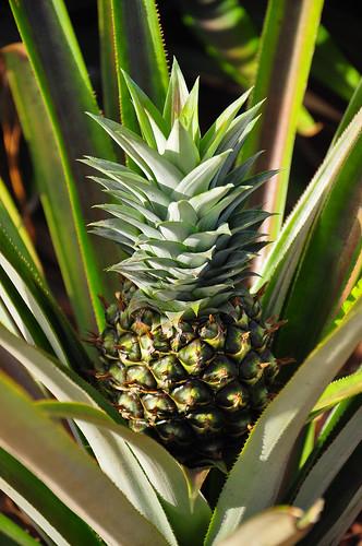 Thailand, Hua-Hin, pineapple