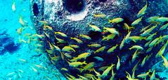 Just Keep Swimming (Lehnerya) Tags: sea fish mexico ruins snorkeling cozumel reef fishes
