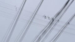 where the lines blur (Mr.  Mark) Tags: sky bw motion blur bird lines photo wire stock creative shake markboucher