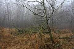 Foggy Swamp (EP Diederiks) Tags: winter holland tree nederland boom swamp waddinxveen gouwebos