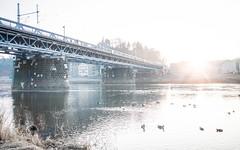 Eisenbahnbrcke Meien (Philipp Seibt) Tags: city bridge light white cold water train river germany deutschland licht town wasser afternoon saxony eisenbahn special sachsen stadt brcke fluss altstadt weiss elbe meissen weis meisen