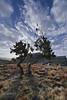 paesaggio, landscape (paolo.gislimberti) Tags: trees alberi landscapes ethiopia paesaggi cloudysky etiopia simien cielonuvoloso alpinegrassland prateriaalpina