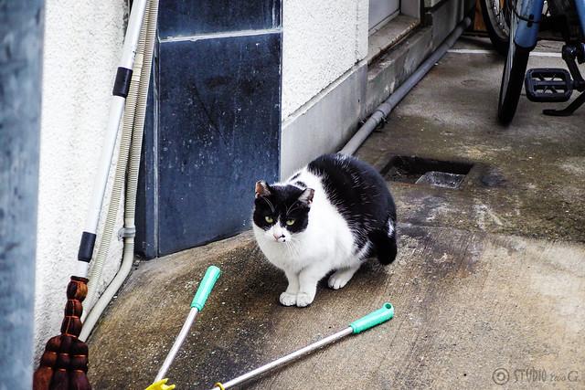 Today's Cat@2015-02-20