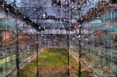 CMA_9996_7_8_tonemapped (c.mane) Tags: rain alberi italia milano pioggia lombardia vetri rhofiera
